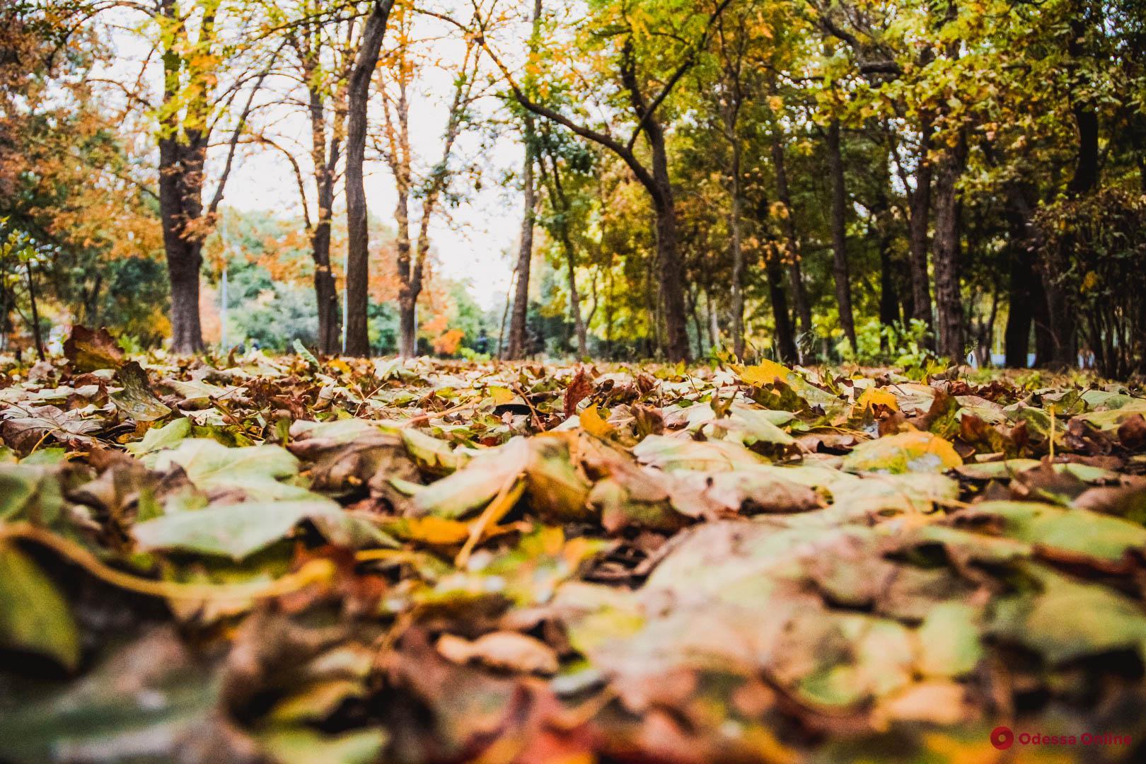 Яркая осень в Преображенском парке (фоторепортаж)