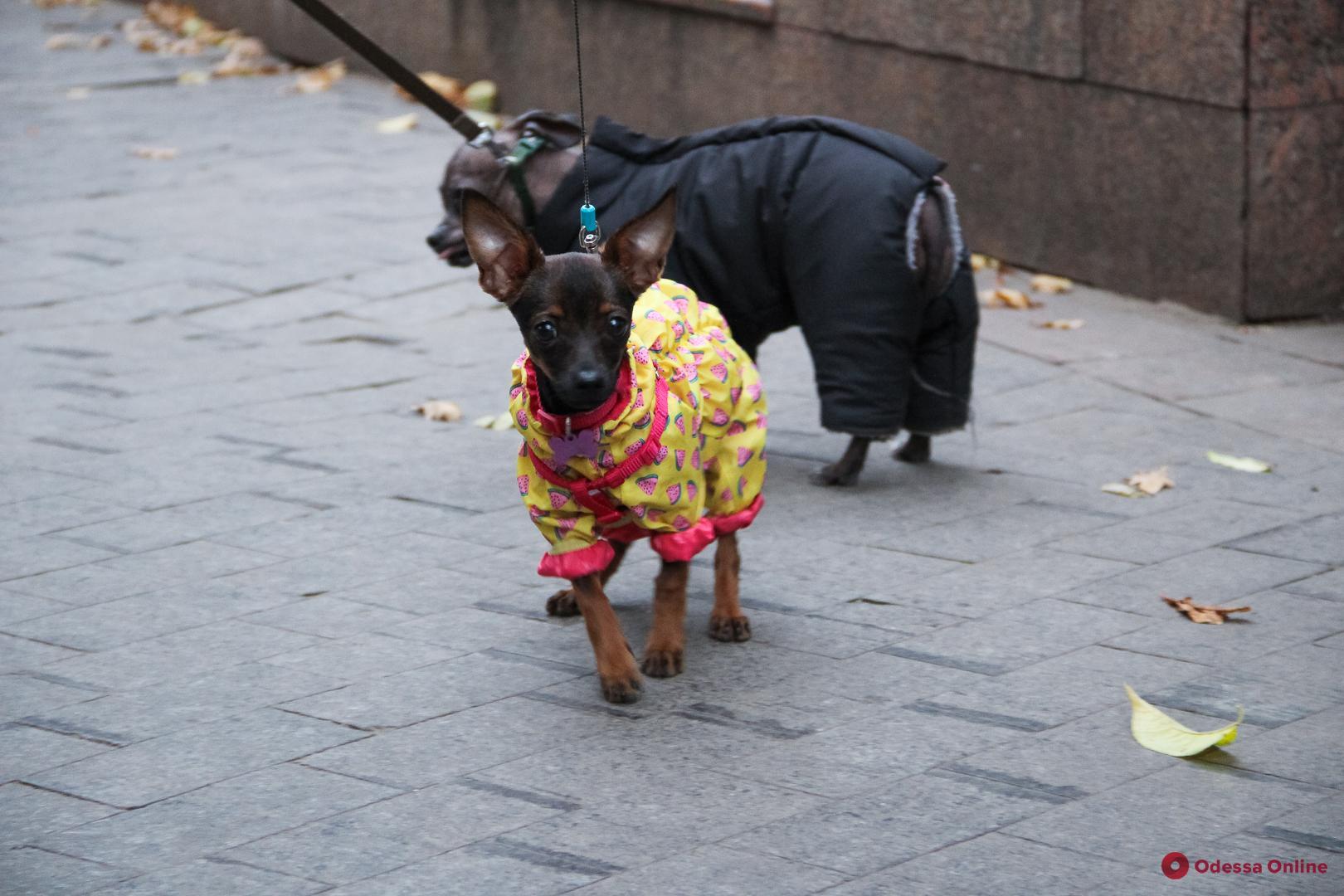 Время утепляться: хвостатые одесские модники (фото)