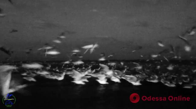 В «Тузловских лиманах» сняли завораживающий видеоролик