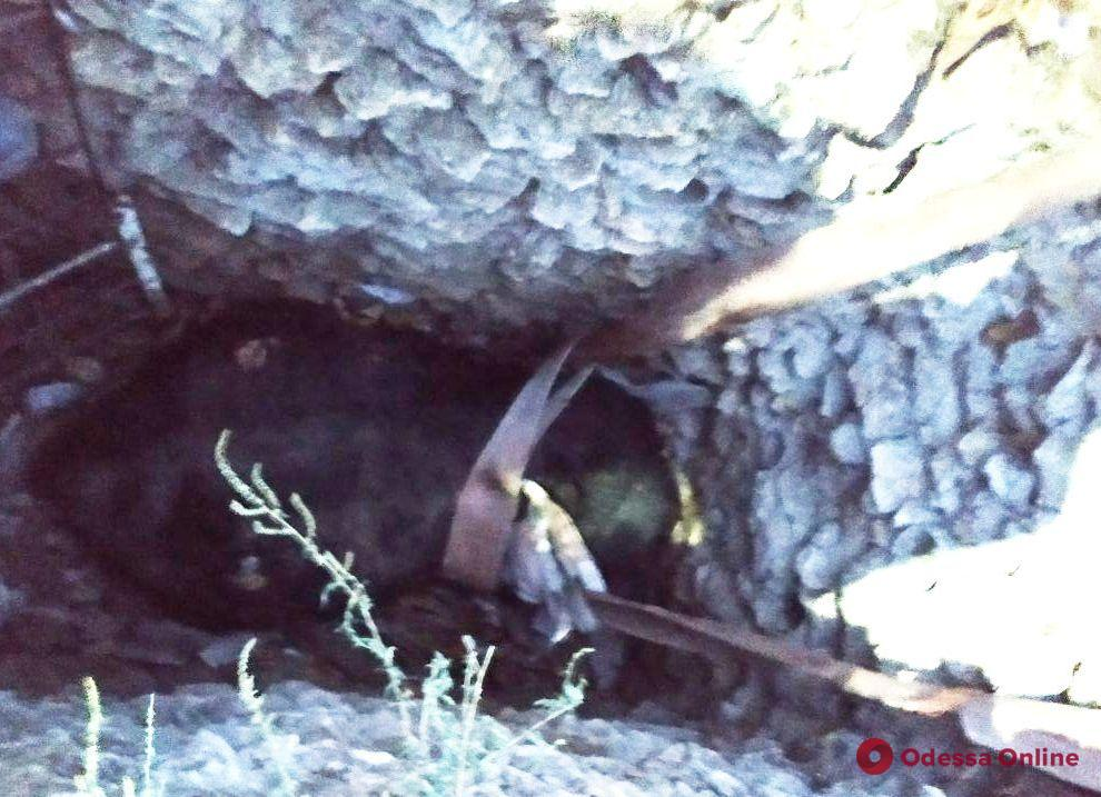 В Березовском районе спасатели вытащили корову из трехметровой ямы