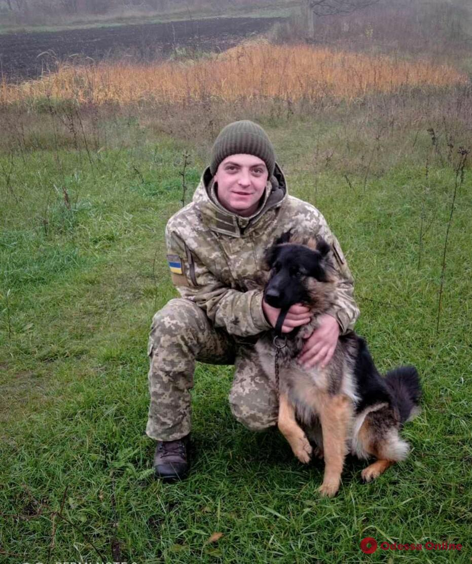 В Одесской области служебная овчарка пограничников загрызла напавшую на нее лисицу