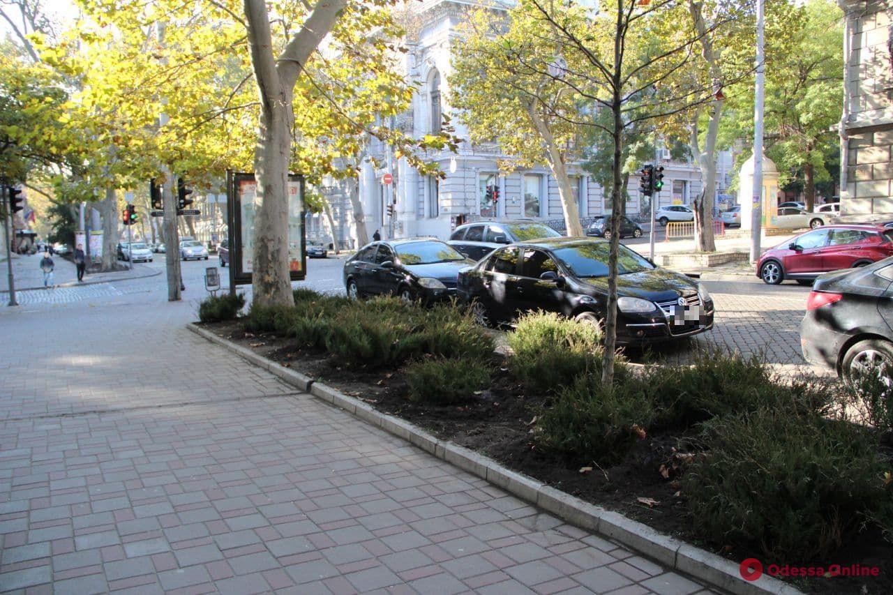На улице Пушкинской высаживают казацкий можжевельник (фото)
