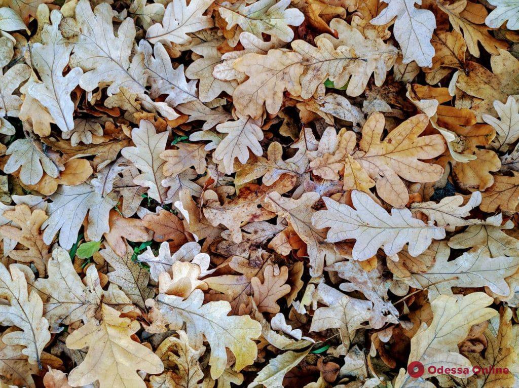 Золотая осень в Одессе: красота солнечного ноября (фоторепортаж)