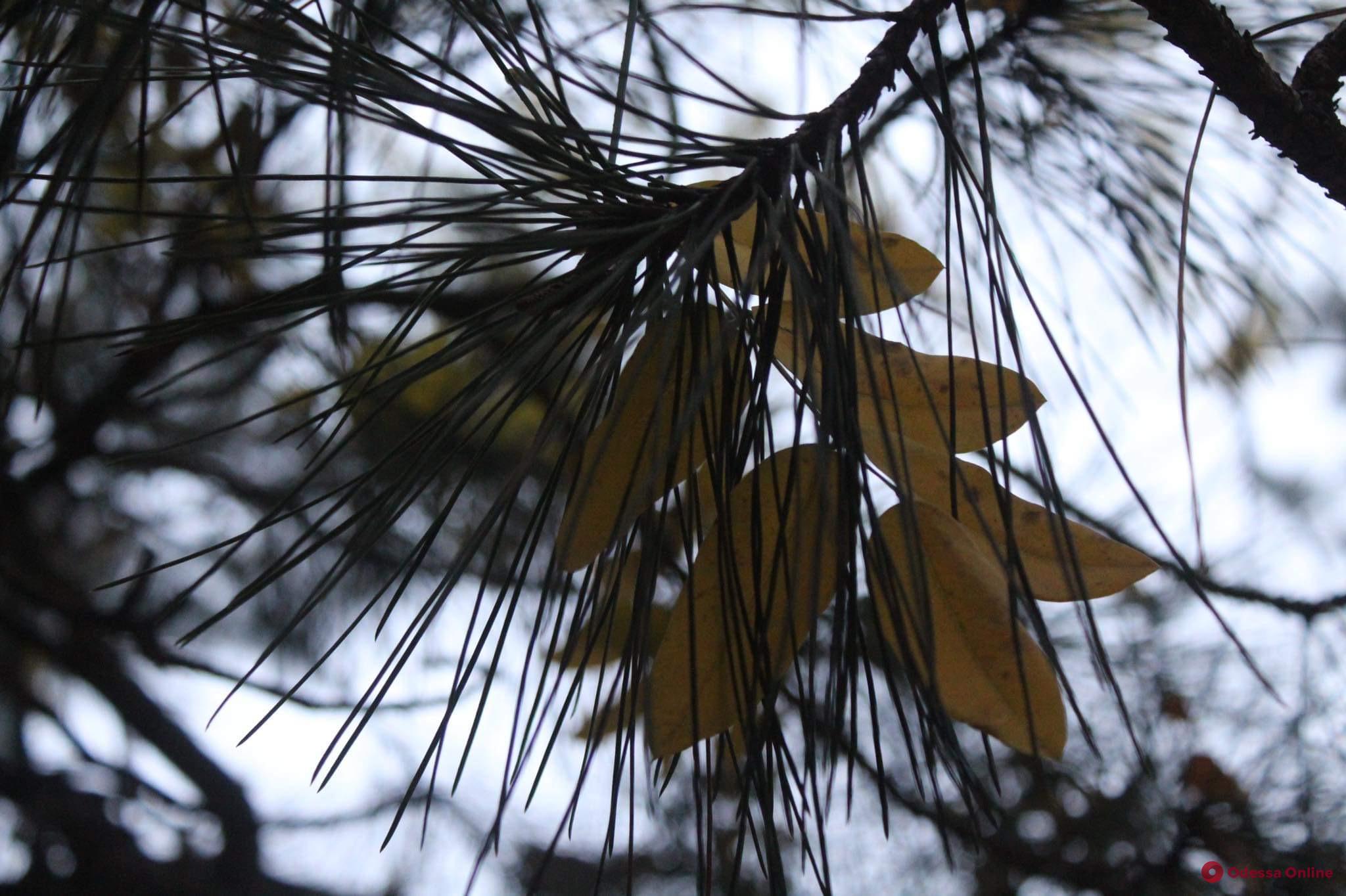 О погоде в понедельник: утром синоптики обещают гололед и налипание мокрого снега
