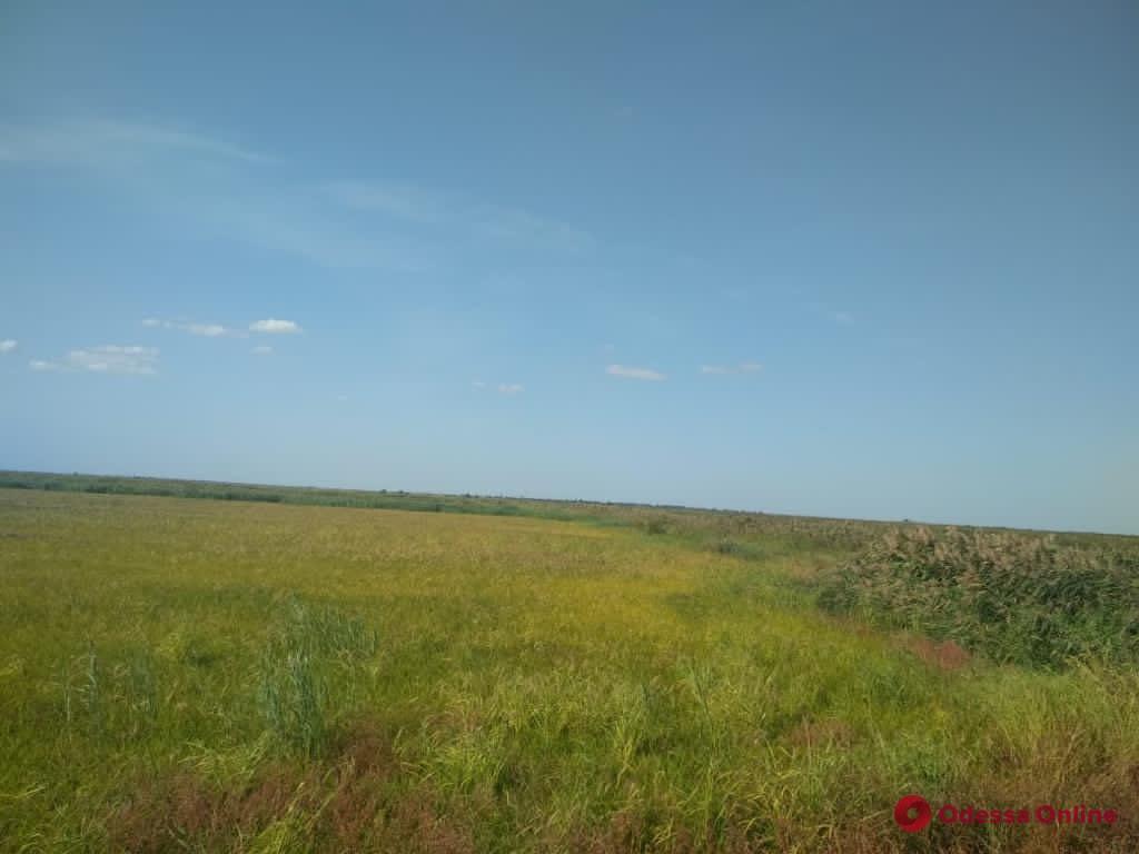 В Одесской области СБУ предотвратила захват земель на 80 миллионов