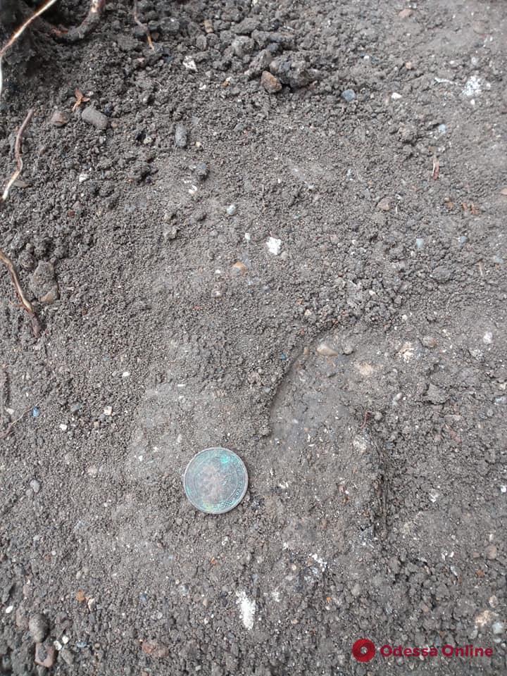 Раскопки Хаджибейского замка: в Одессе археологам подкинули «царские» монеты