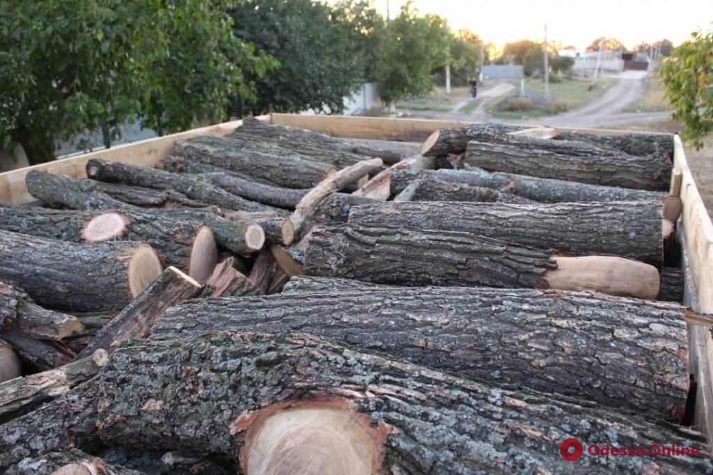 В Одесской области предприниматель ответит в суде за взятку полицейскому и незаконную вырубку леса