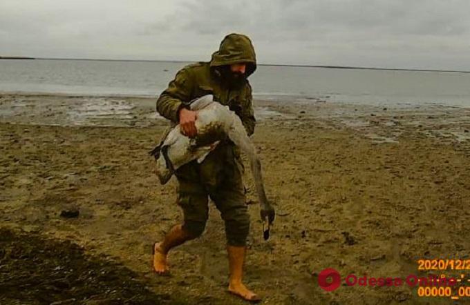 Возле «Тузловских лиманов» массово гибнут редкие птицы