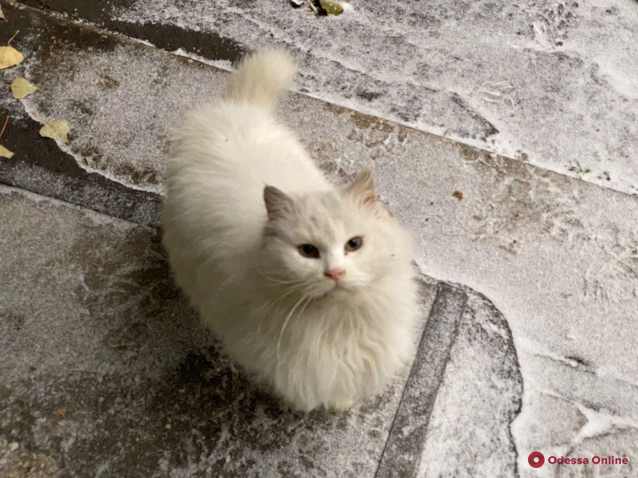 О погоде: 14 января в Одессе ожидается гололедица, ночью до -3°С