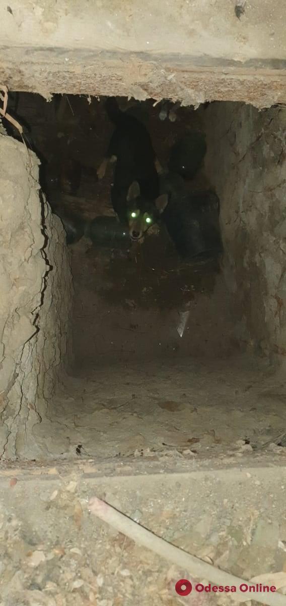 В Одесской области сотрудники ГСЧС спасли трех щенков