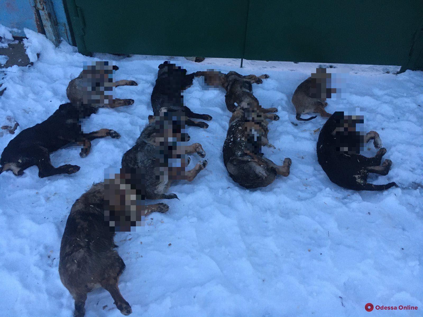 Были мирными и дружелюбными: под Одессой неизвестный живодер отравил десять собак