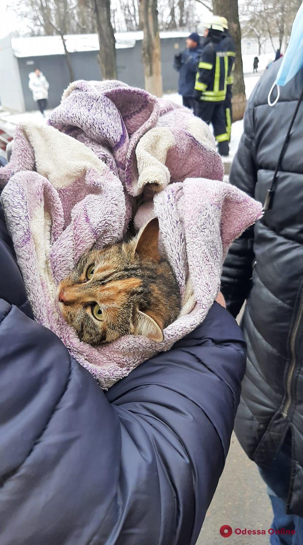 На Таирова спасли кота, который трое суток просидел на тополе (видео)