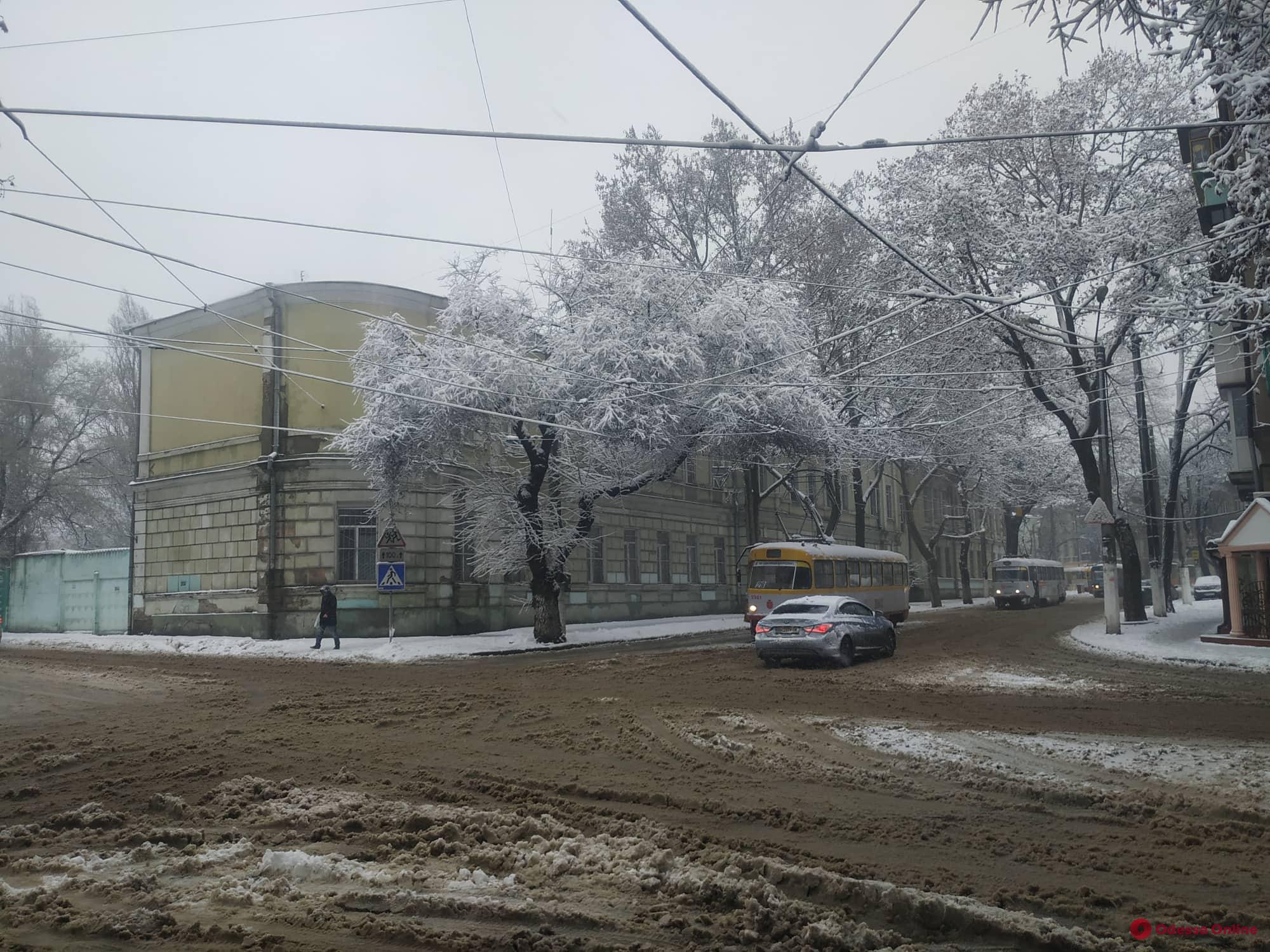 В центре Одессы из-за упавшей ветки стоят трамваи