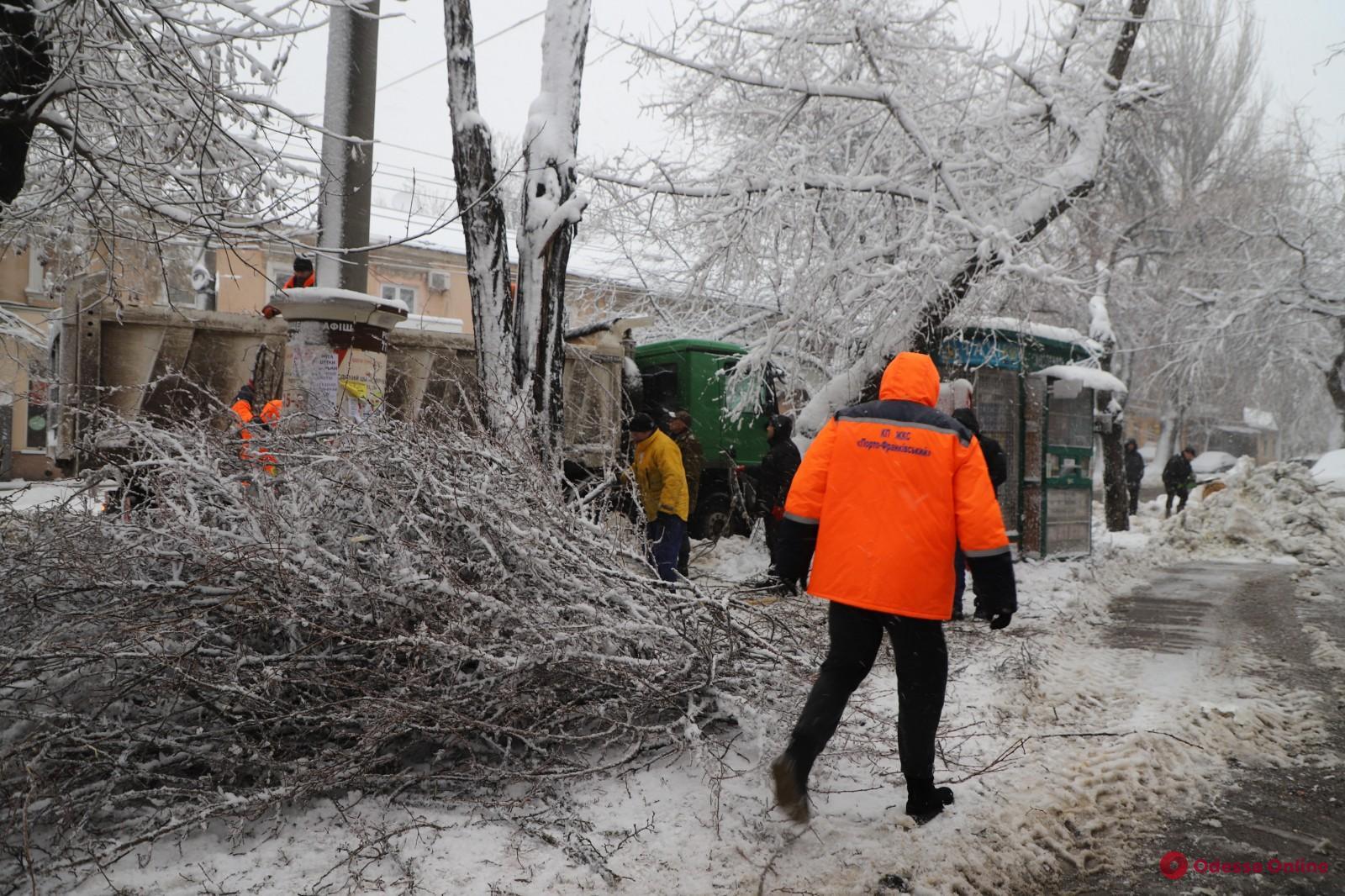 Последствия непогоды: в Одессе за два дня рухнули порядка 800 деревьев и веток, оборвано 400 сетей