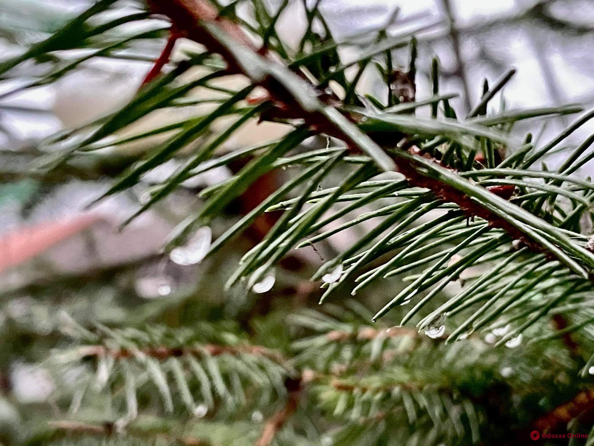 О погоде в понедельник: утром и днем в Одессе синоптики обещают дождь и порывистый ветер