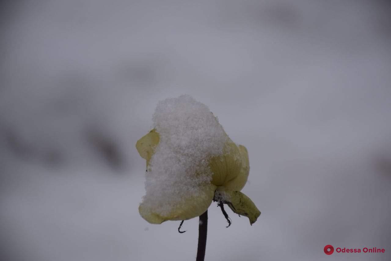 О погоде: 27 января в Одессе ожидается метель и гололедица