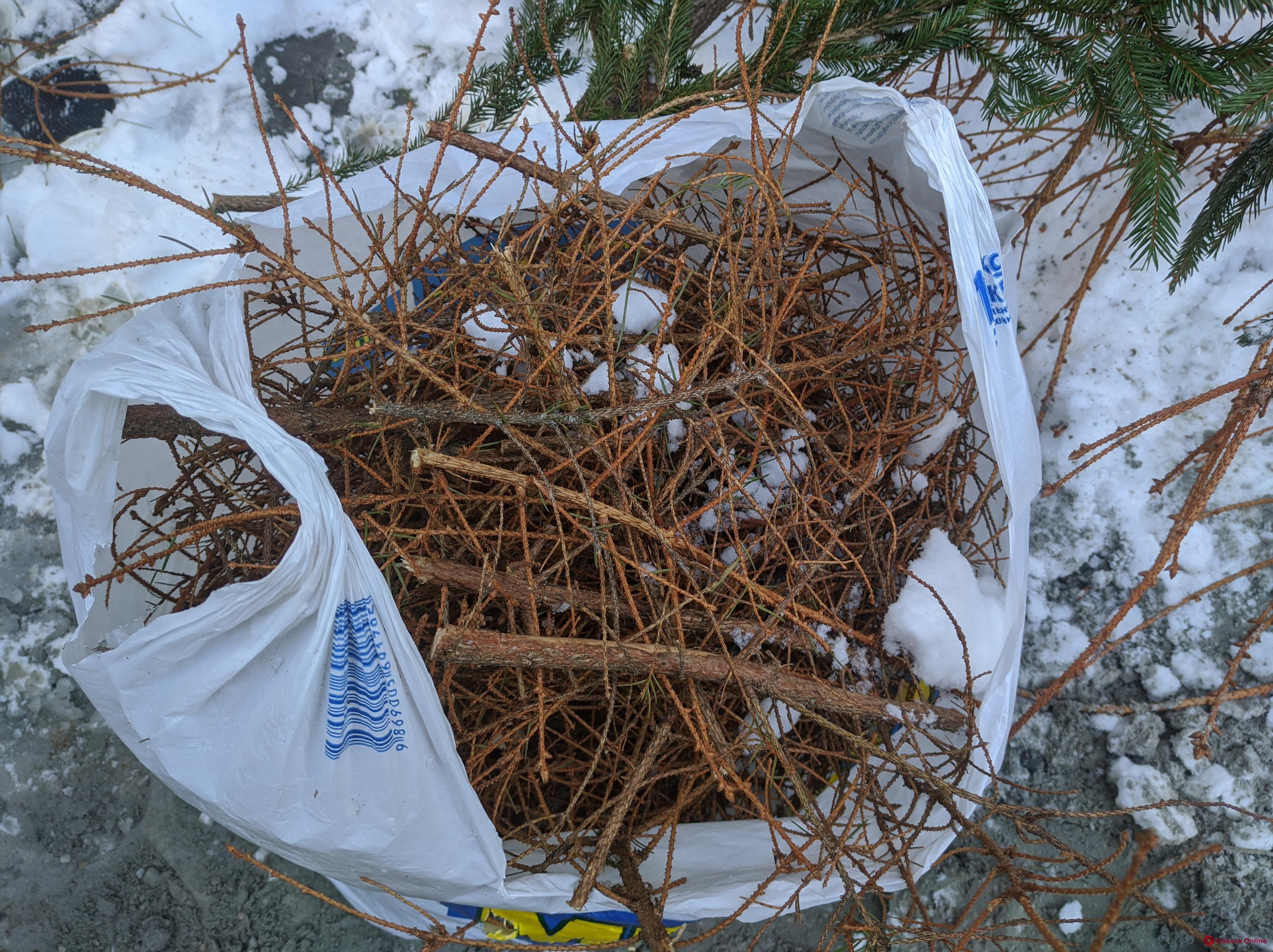 Обменяй елку на конфету: одесситы несут деревья на переработку (фото)