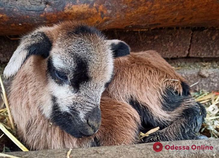 В Одесском зоопарке — первое в этом году пополнение