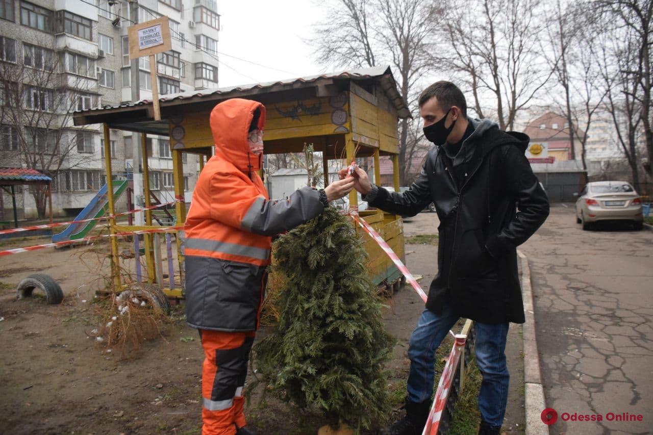 Елки в обмен на конфеты: в Одессе работают пункты приема новогодних деревьев