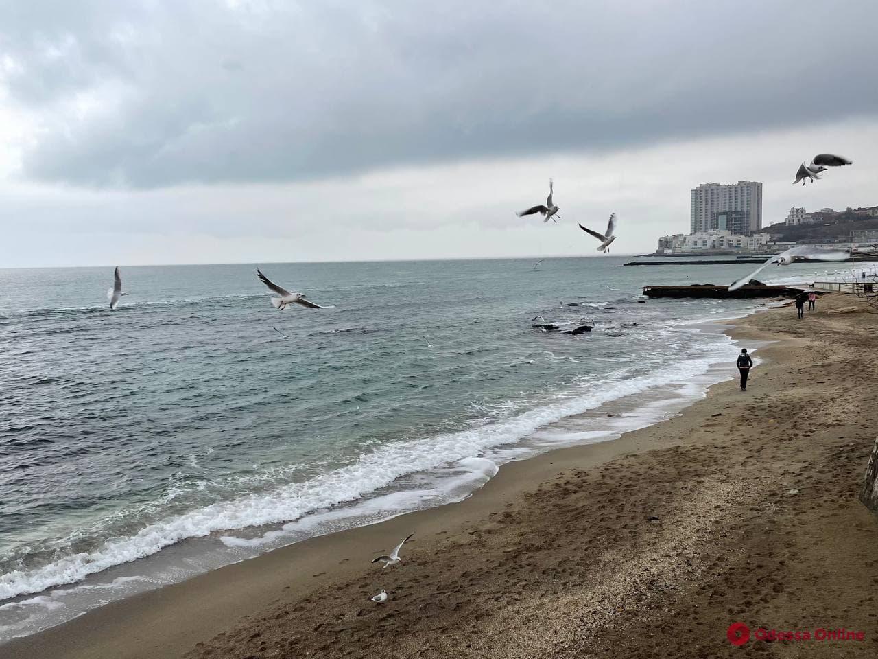 Море, птицы и дождь: постпраздничная Аркадия (фоторепортаж)