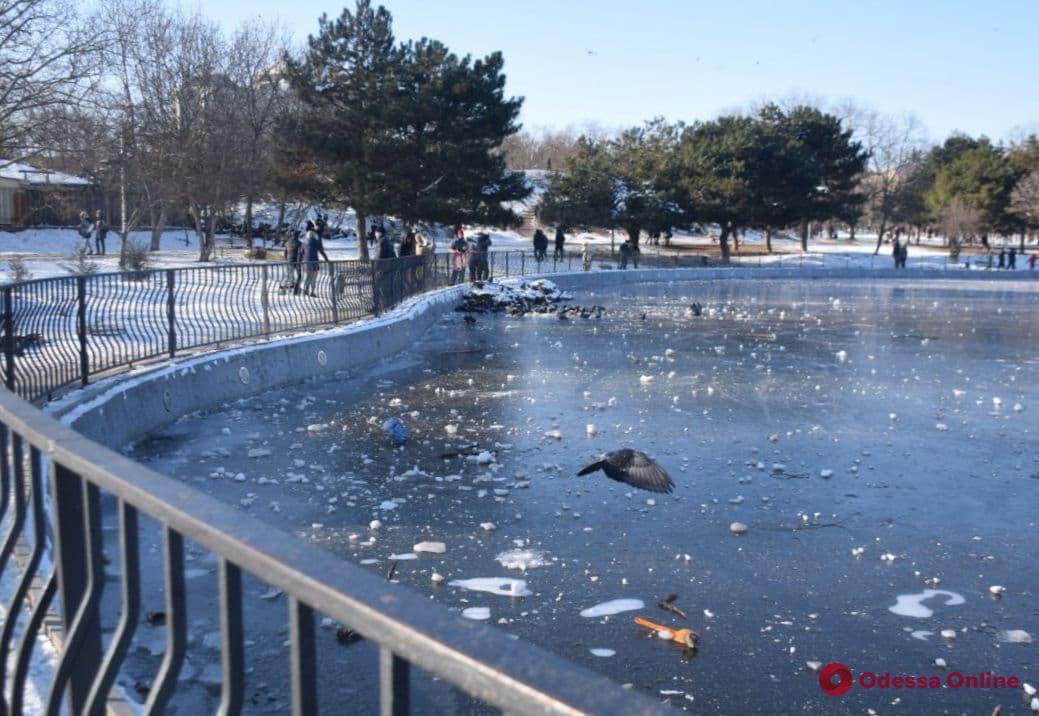 В парке Победы замерз пруд — горожане во всю катаются на коньках (фото)