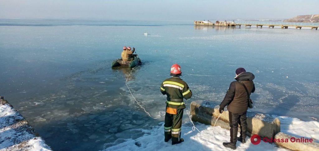В Одесской области спасатели из ледяных ловушек освободили двух лебедей