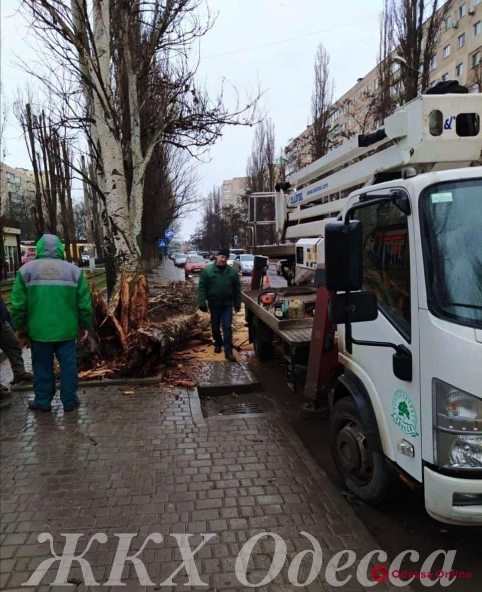 В Одессе сильный ветер повалил несколько деревьев