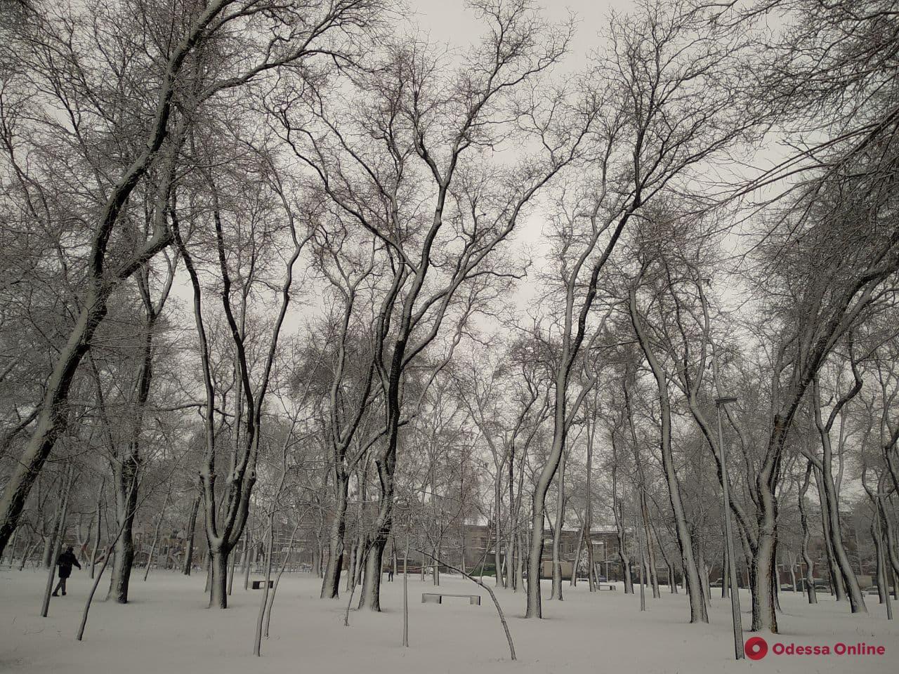 В ближайшие три часа в Одессе выпадет свыше месячной нормы снега (фото)