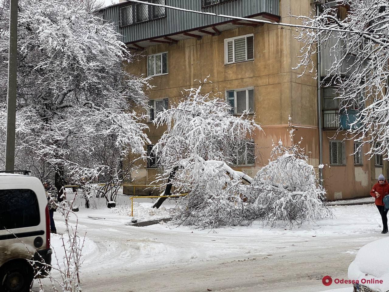 Из-за непогоды в Одессе рухнули 59 деревьев