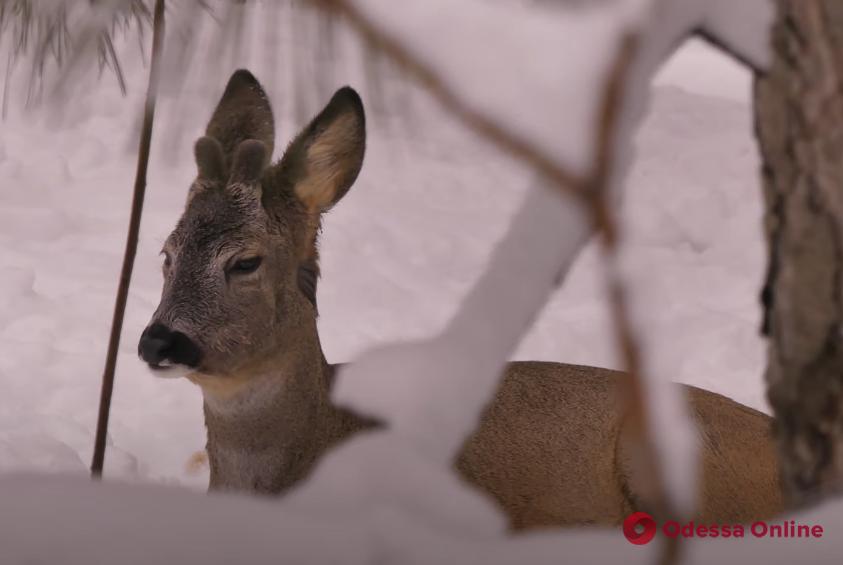 Как в мультфильме: в одесском зоопарке сняли зимний видеоролик