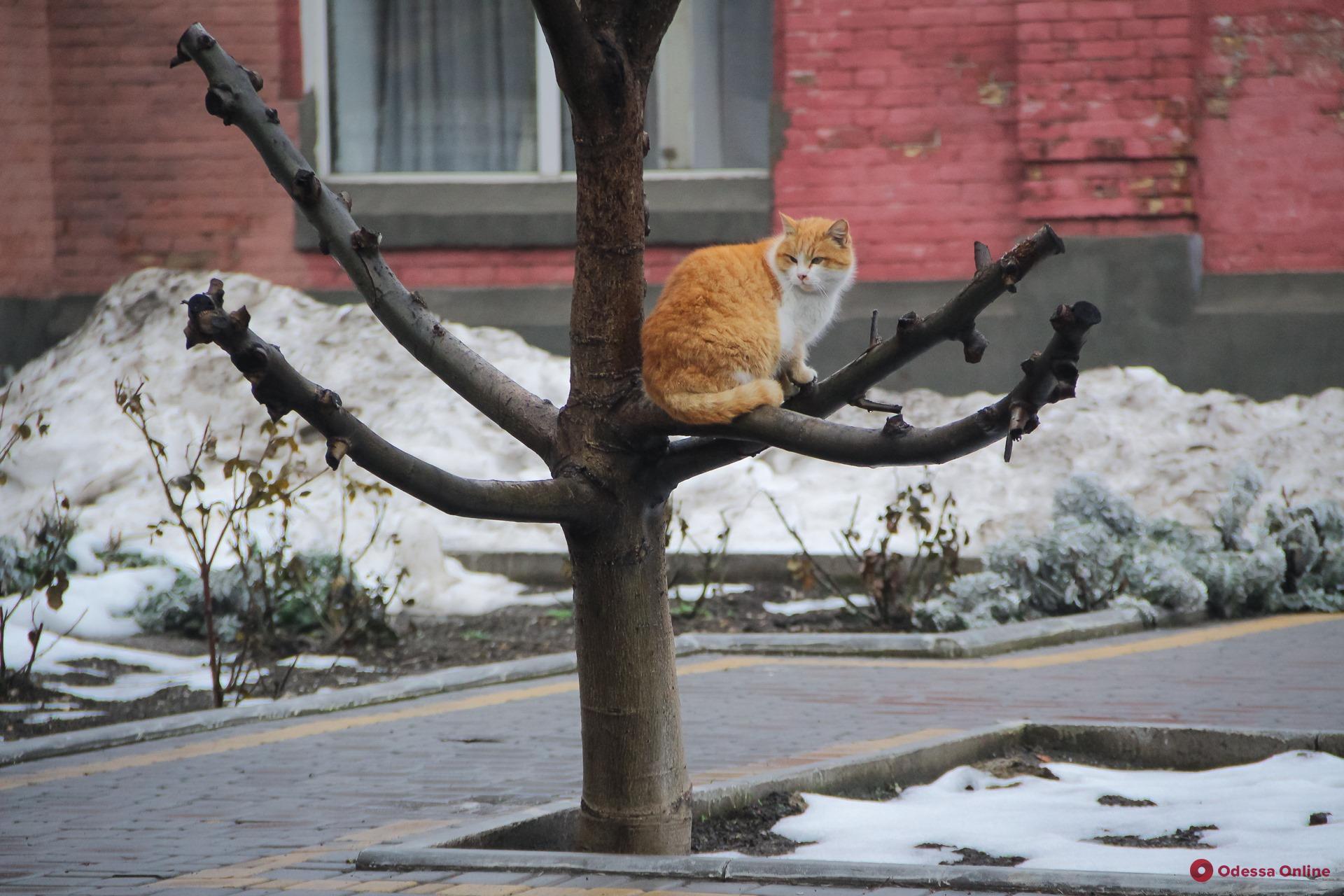 Погода в Одессе: 11 февраля столбик термометра поднимется до +9