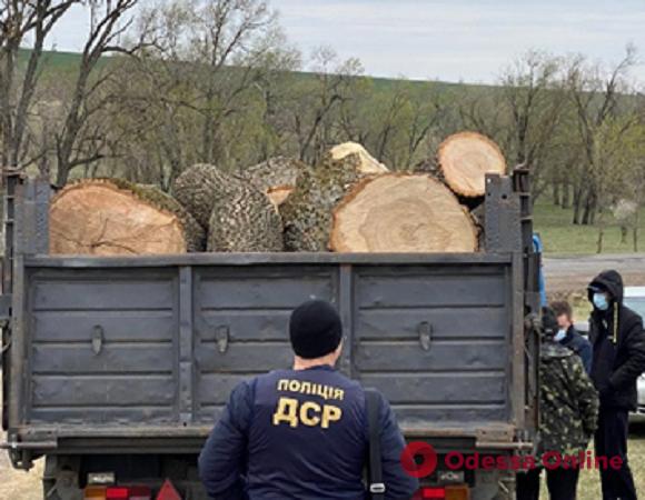 Ущерб на миллион: пятеро сотрудников Одесской железной дороги ответят в суде за вырубку леса