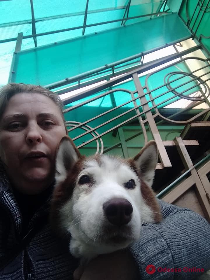 Жестокое нападение на хаски в Холодной Балке: пес идет на поправку (видео)