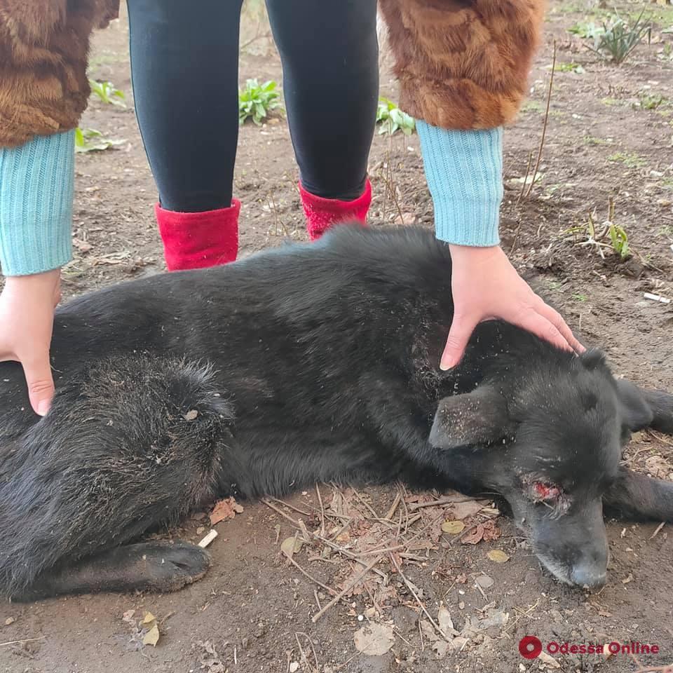 В Одессе собака выпала с третьего этажа многоэтажки