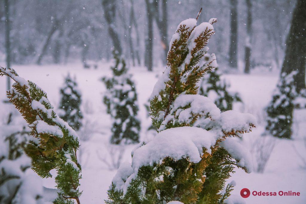 Снежная сказка в Преображенском парке (фоторепортаж)
