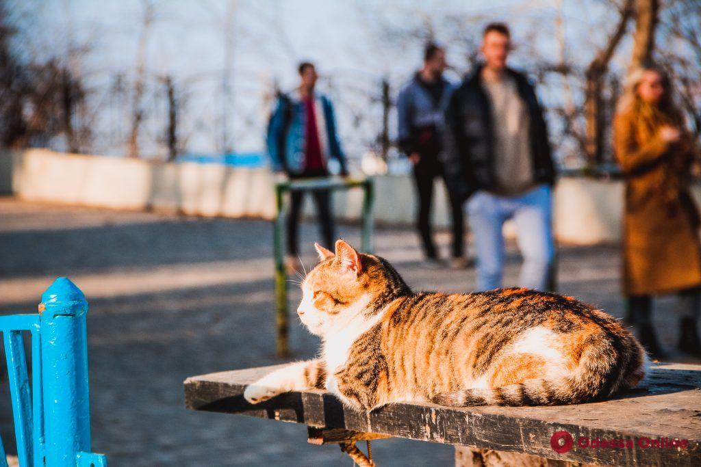 Одесские мурлыки в ожидании марта (фоторепортаж)