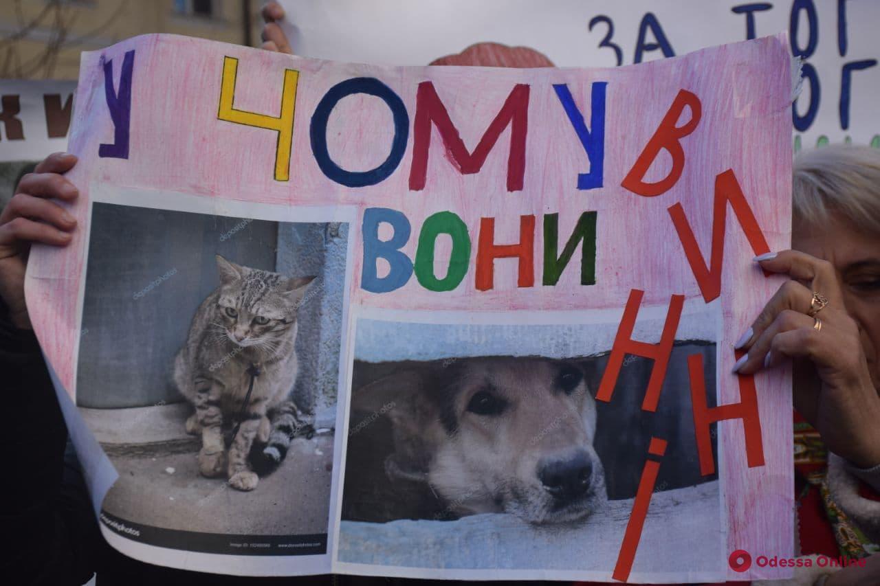 Одесские зоозащитники устроили митинг под зданием облуправления полиции (фото)
