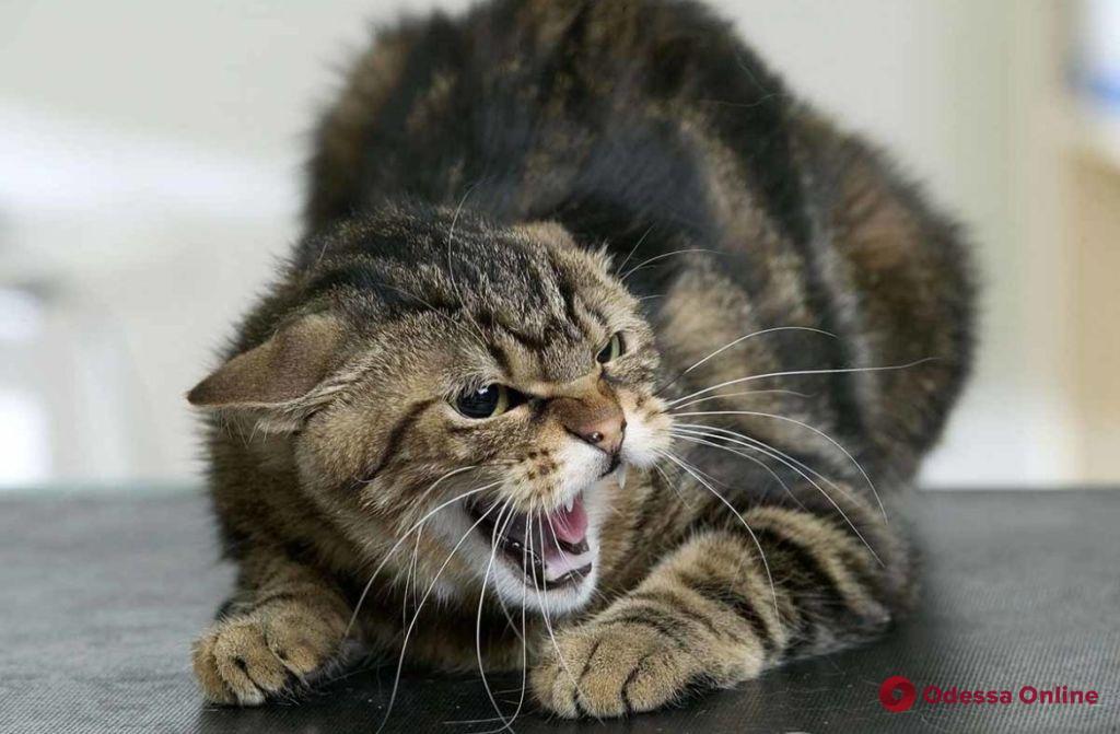 В Одесском порту у кошки выявили бешенство