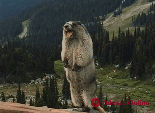 День Сурка: питомца одесского зоопарка Ватрушку решили не будить