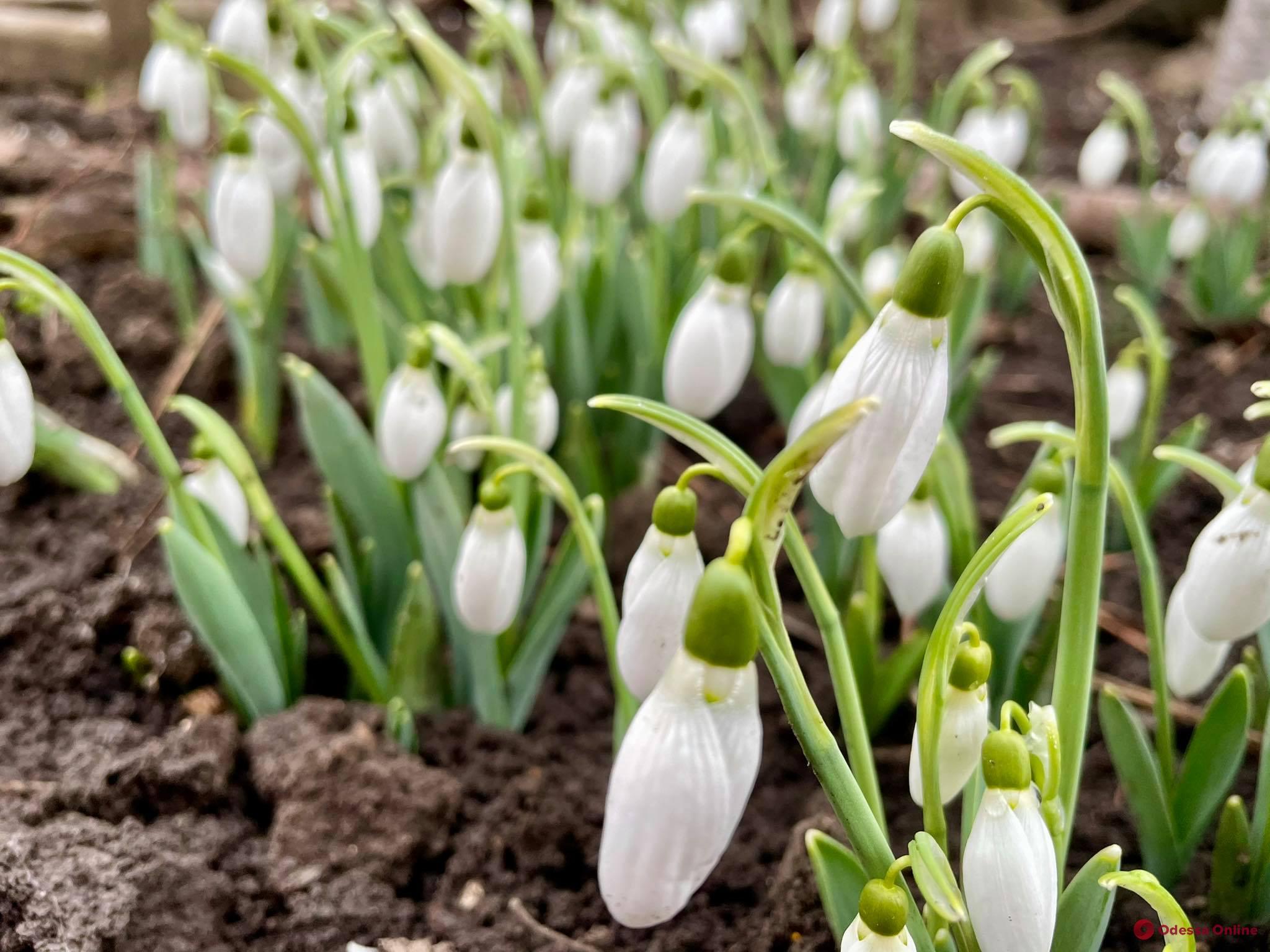 О погоде: 3 марта в Одессе осадков не ожидается