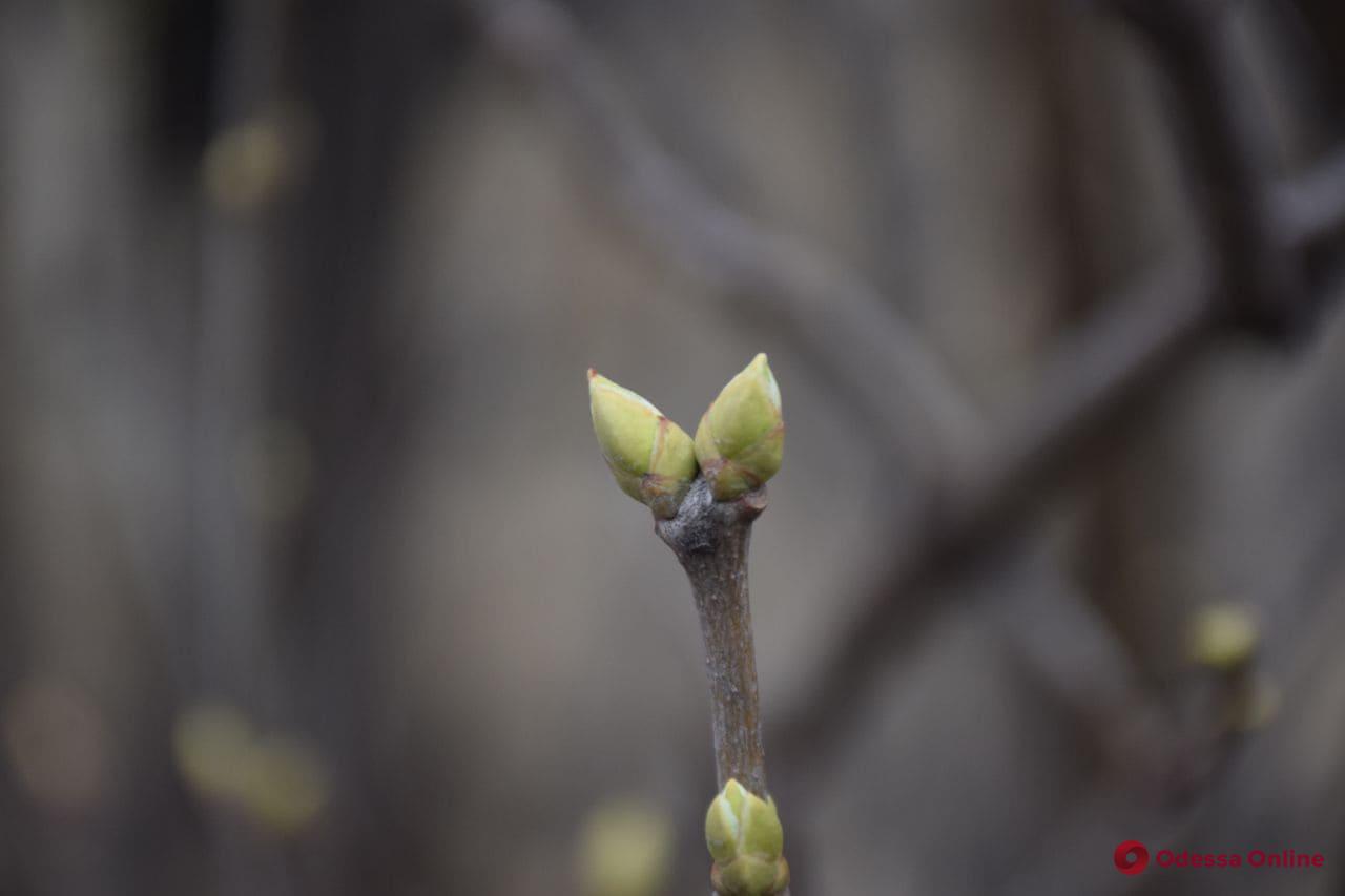 О погоде: 2 марта в Одессе ожидается до +8