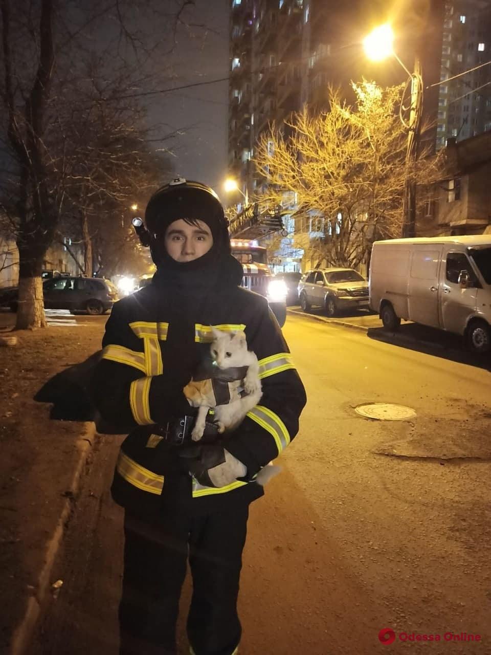 В Одессе и области спасатели снимали с деревьев застрявших котов