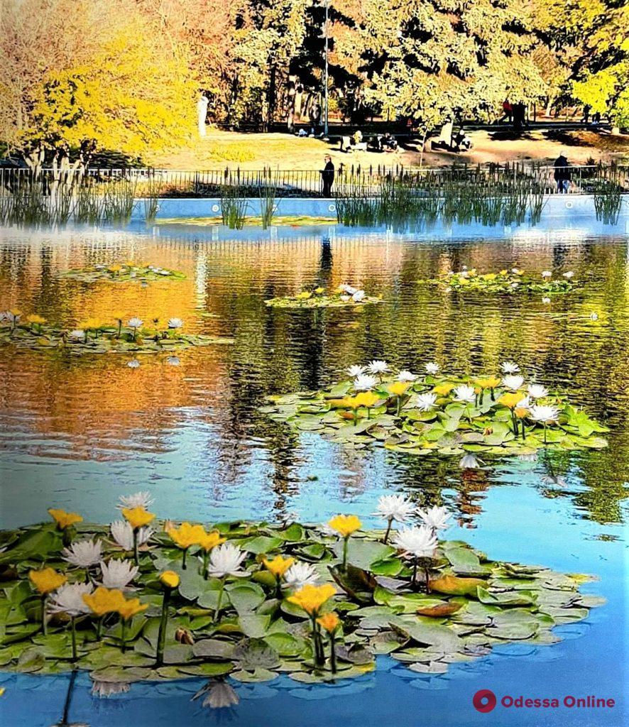 Пруды в одесском парке Победы украшают живыми цветами