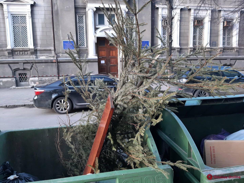 За несколько дней до апреля: одессит не выдержал и выбросил елку (фотофакт)
