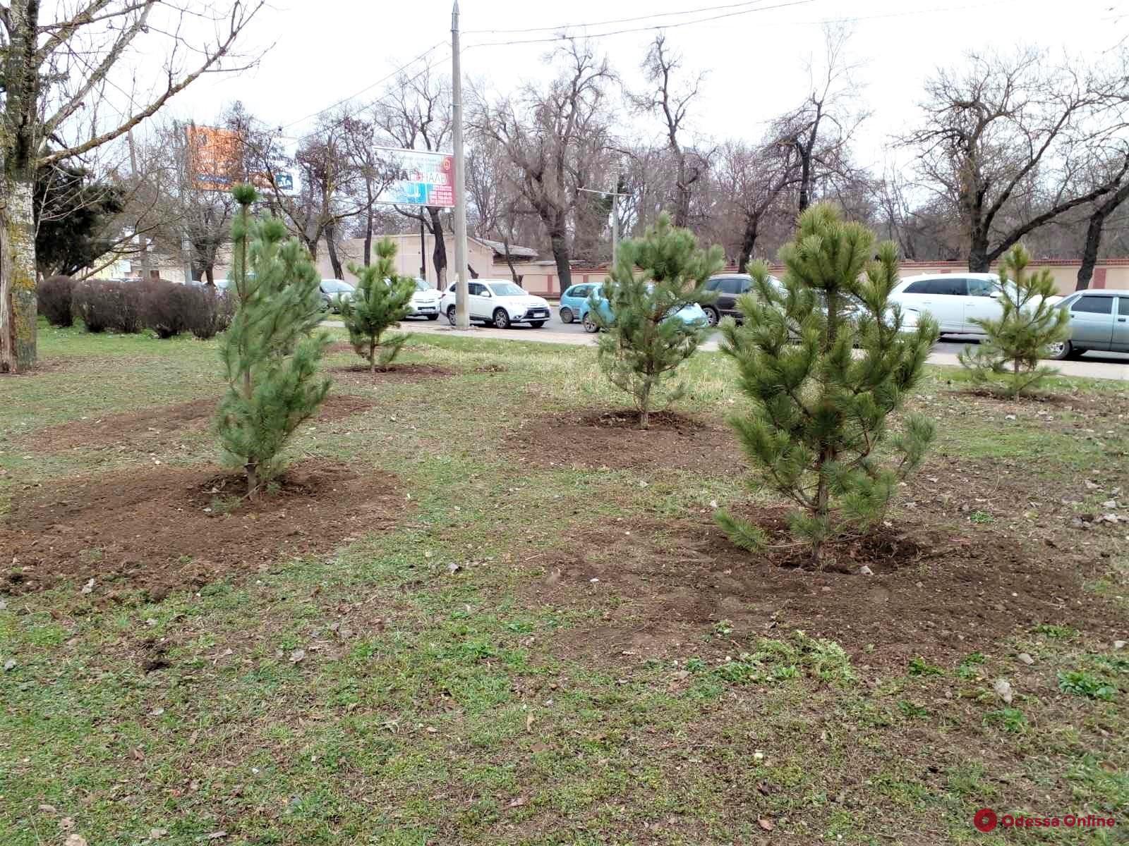 На Крымском бульваре коммунальщики высадят 140 сосен