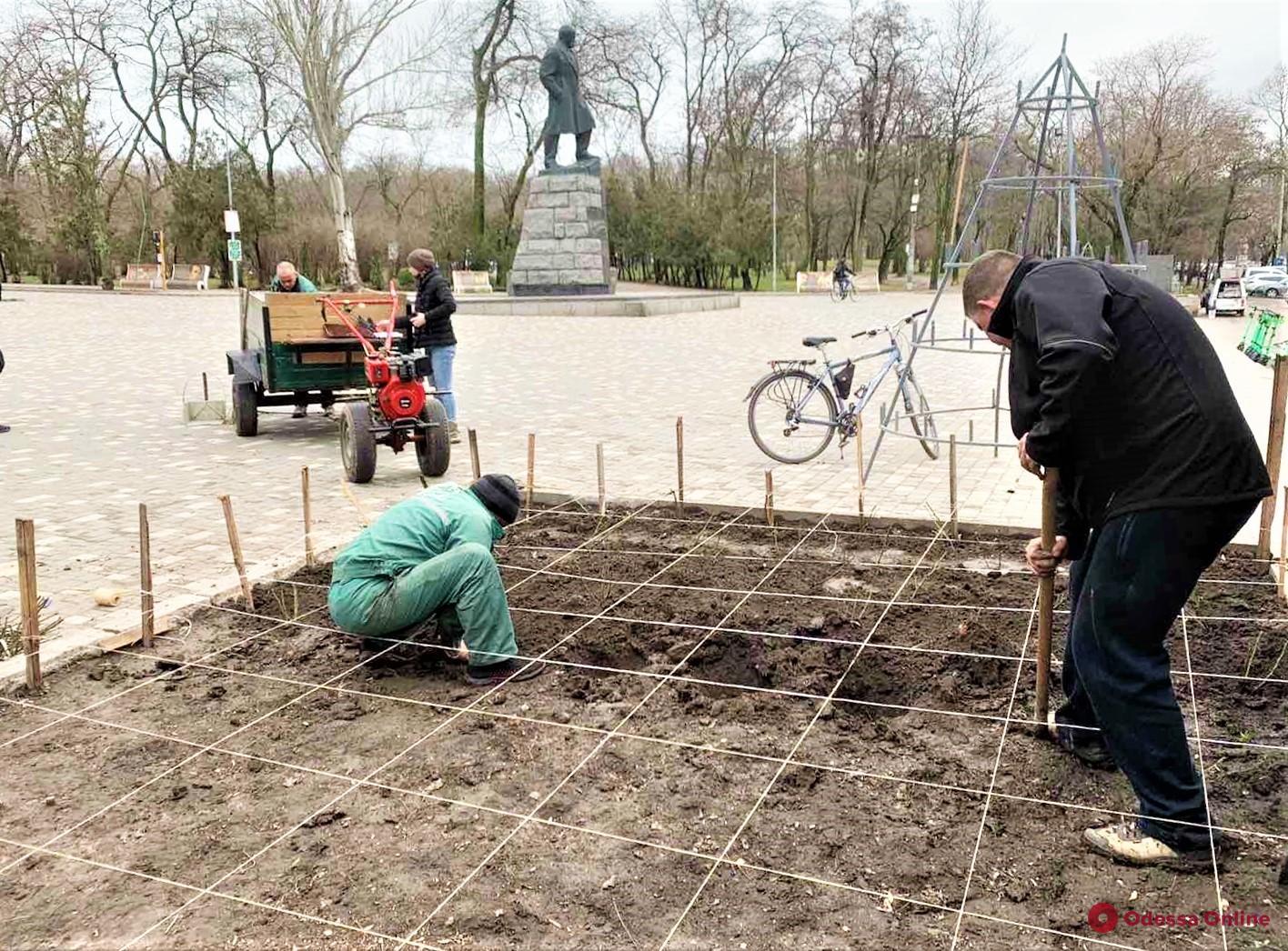 Одессу украсят 86 тысячами кустов роз