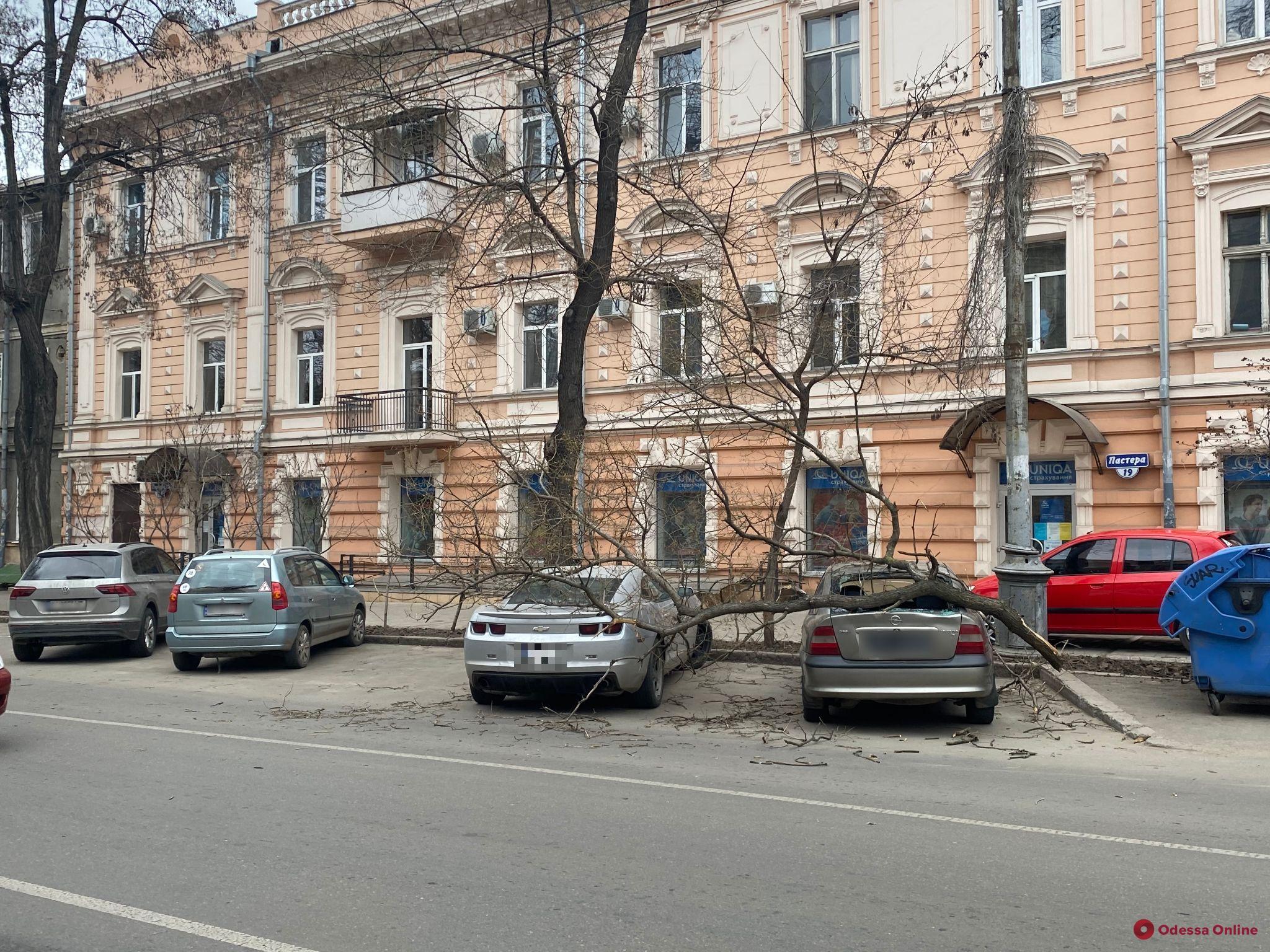 На Пастера ветка рухнула на припаркованные машины