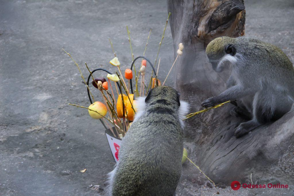 В Одесском зоопарке отмечали праздник Весны (фото)