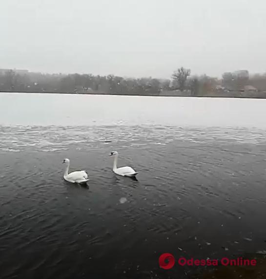 Конец марта: на севере Одесской области пошел снег (видео, обновлено)