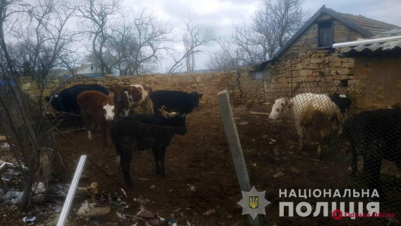 Жителя Одесской области привлекли к ответственности за жестокое обращение с животными